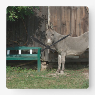 Adorable Donkey Next To Wooden Green Bench Square Wall Clock