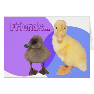 Adorable Ducklings Photograph Card