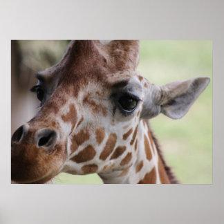 Adorable giraffe face poster