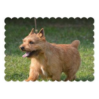 Adorable Glen of Imaal Terrier 13 Cm X 18 Cm Invitation Card
