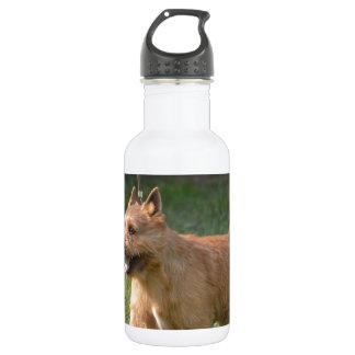 Adorable Glen of Imaal Terrier 532 Ml Water Bottle