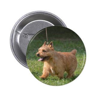 Adorable Glen of Imaal Terrier Pins