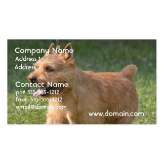 Adorable Glen of Imaal Terrier Pack Of Standard Business Cards