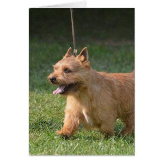 Adorable Glen of Imaal Terrier Greeting Card