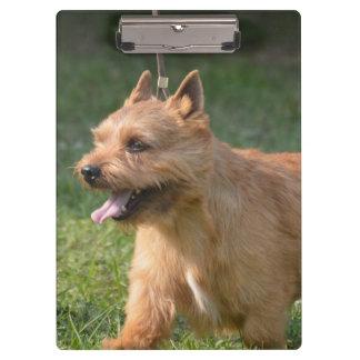 Adorable Glen of Imaal Terrier Clipboard