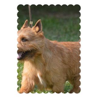 Adorable Glen of Imaal Terrier Invitations