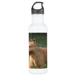 Adorable Glen of Imaal Terrier 710 Ml Water Bottle