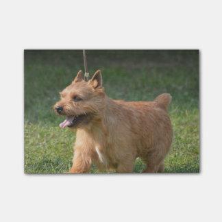 Adorable Glen of Imaal Terrier Post-It Notes