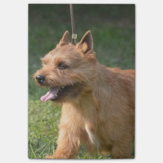 Adorable Glen of Imaal Terrier Sticky Note