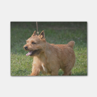Adorable Glen of Imaal Terrier Post-it® Notes