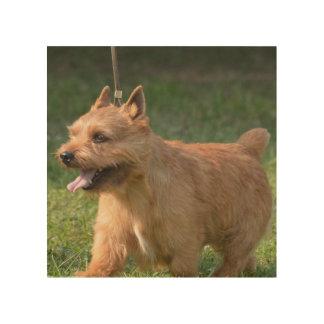 Adorable Glen of Imaal Terrier Wood Canvas