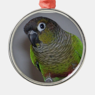 Adorable Greencheek Conure Metal Ornament