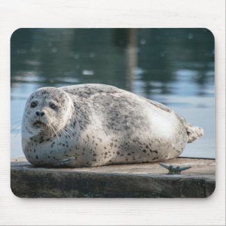 Adorable Harbor Seal Mouse pad