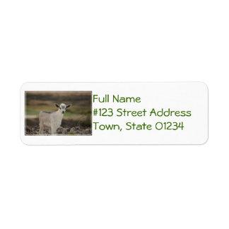 Adorable Kid Goat Return Address Label