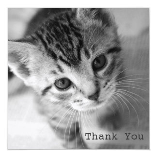 Adorable Kitten Square Flat Thank You Cards 13 Cm X 13 Cm Square Invitation Card