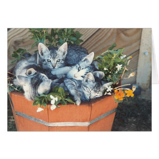 Adorable Kitties in a Basket Note Card