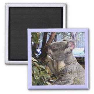 Adorable Koala Magnet