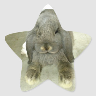 Adorable lop eared bunny star sticker