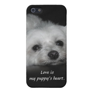 Adorable Loving Maltese Puppy iPhone 5 Covers