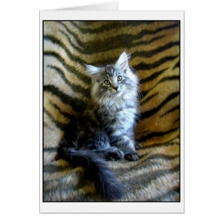 Adorable Maine Coon kitten greeting card