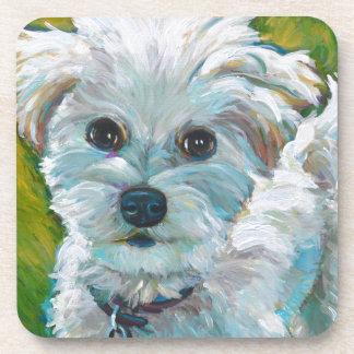 Adorable MALTIPOO Coaster