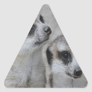 adorable meerkats s triangle stickers