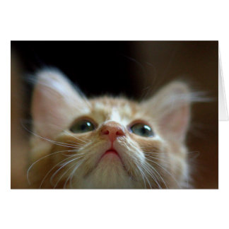 Adorable Orange Tabby Kitten Card
