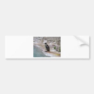 Adorable Penguin Bumper Sticker
