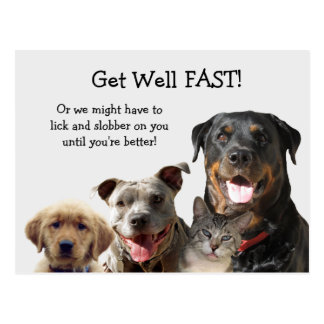 Adorable Pets Get Well Postcard