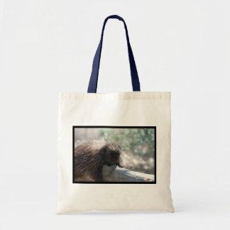 Adorable Porcupine