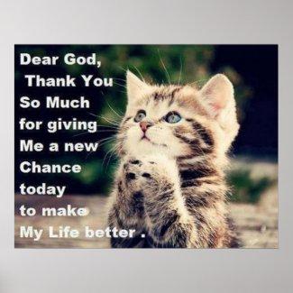Kittens For Christian Kittens For Christian