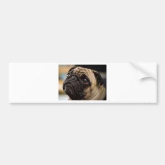 Adorable Pug Car Bumper Sticker