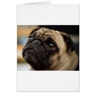 Adorable Pug Card