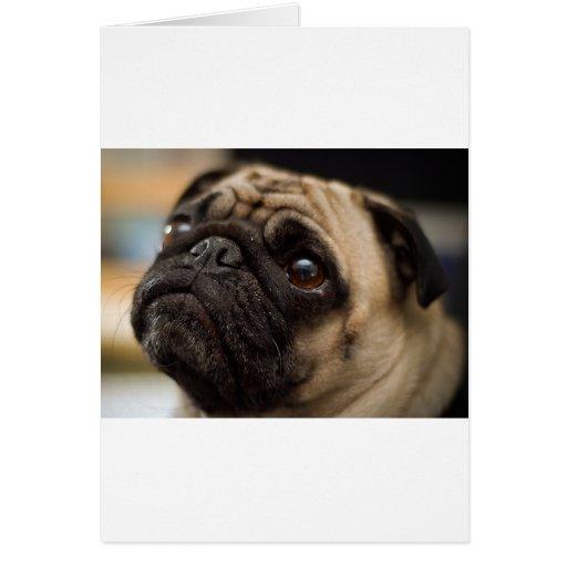 Adorable Pug Card