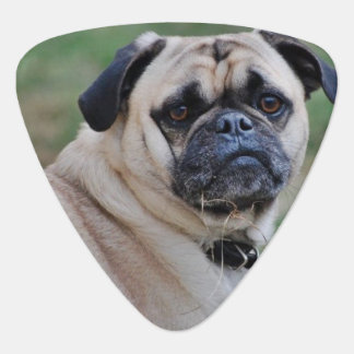Adorable Pug Guitar Picks