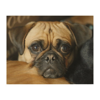 Adorable pug portrait wood wall decor