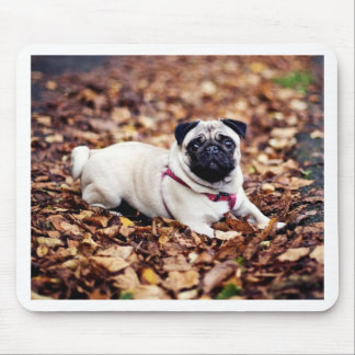 Adorable Pug Rests On The Autumn Foliage Mouse Pad