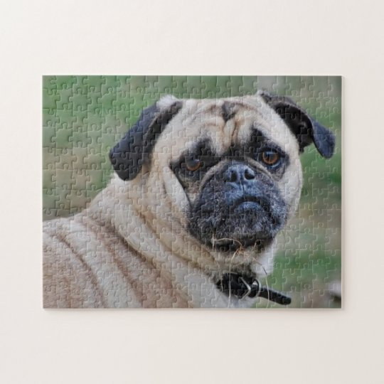 Adorable Pug With A Piece Of Grass Puzzle