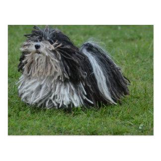 Adorable Puli Dog Postcard