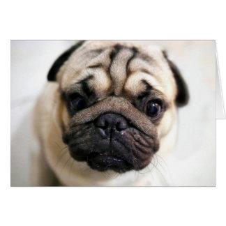 Adorable Puppy Eyes Pug Card