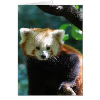 Adorable Red Panda  Greeting Card