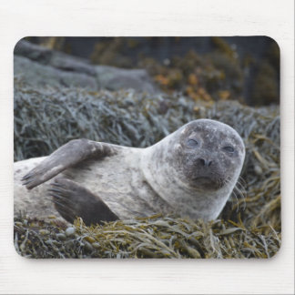 Adorable Seal Mouse Pad