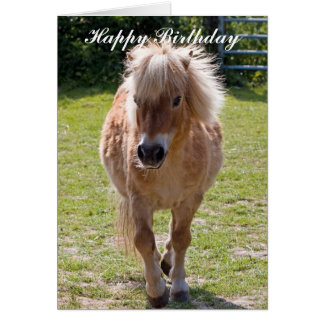 Adorable shetland pony birthday greeting card