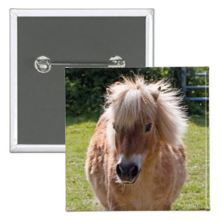 Adorable shetland pony head close-up button gift
