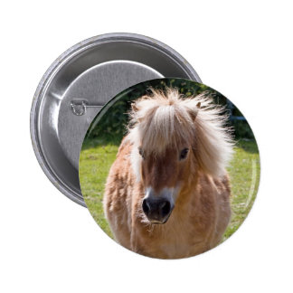 Adorable shetland pony head close-up button, gift