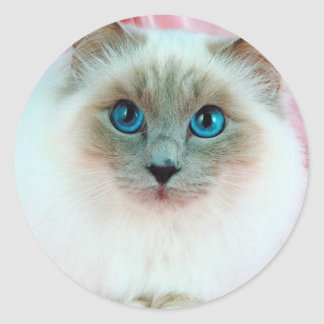 Adorable Siamese Cat 1 Classic Round Sticker