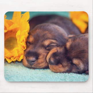 Adorable sleeping Doxen puppies Mouse Pad