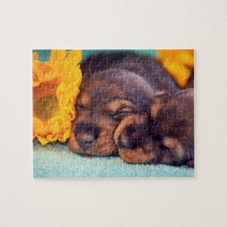 Adorable sleeping Doxen puppies Puzzle