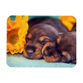 Adorable sleeping Doxen puppies Rectangular Photo Magnet