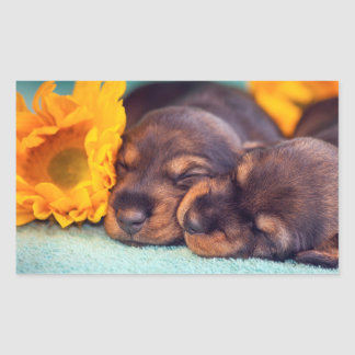 Adorable sleeping Doxen puppies Rectangular Sticker